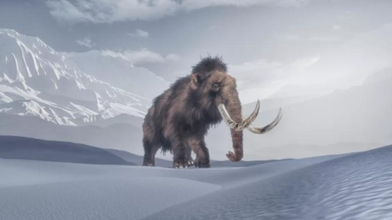 mamut 1 sSjl