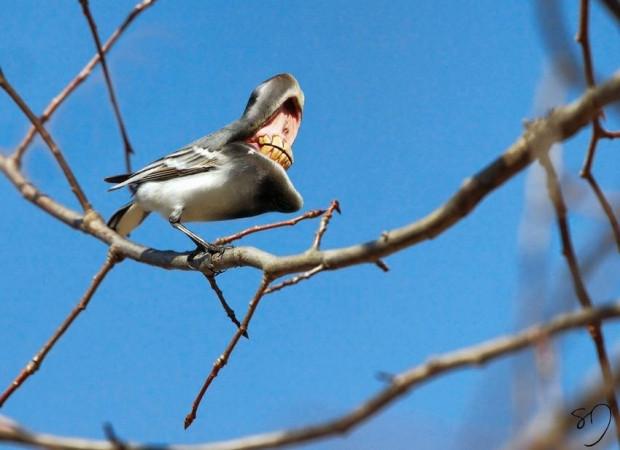 11 tüyler ürpertici kuş! - Page 3