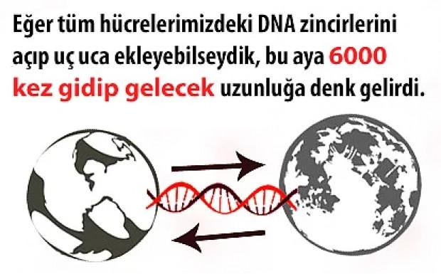 DNA hakkında 11 ilginç bilgi - Page 4