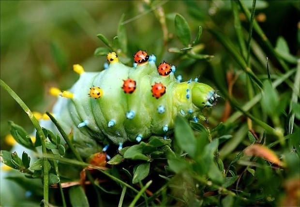 19 kelebek türünün metamorfozdan önceki ve sonraki halleri - Page 1