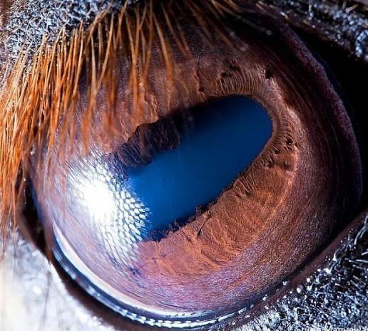 20 hayvana ait yakın çekim göz fotoğrafları - Page 1