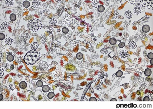 2012 yılının Mikroskopla çekilen en iyi fotoğrafları - Page 1