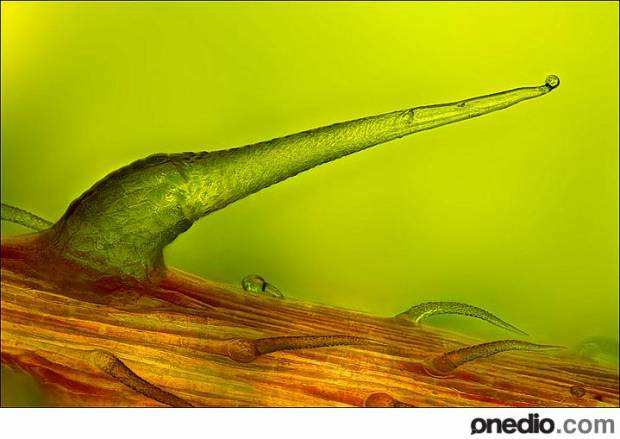 2012 yılının Mikroskopla çekilen en iyi fotoğrafları - Page 2