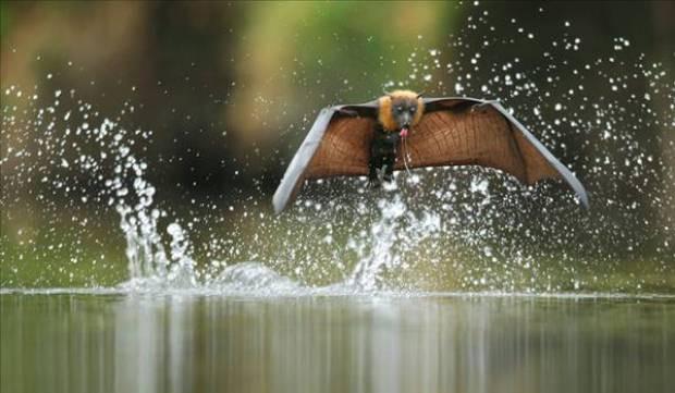 2012'nin en iyi vahşi yaşam fotoğrafları - Page 2