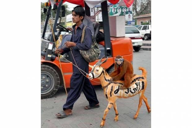2012'nin en komik hayvanları! - Page 2