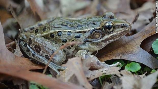2014 yılında keşfedilmiş 17 yeni hayvan türü - Page 2