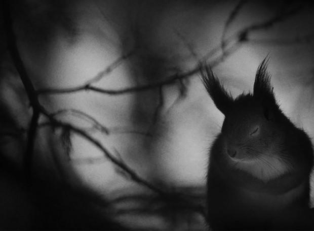 2017 Vahşi Yaşam Fotoğrafları yarışması finalistleri - Page 1