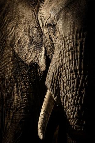2017 Vahşi Yaşam Fotoğrafları yarışması finalistleri - Page 4