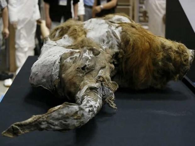 39 Bin yaşındaki Mamut'un ilk görüntüleri - Page 2