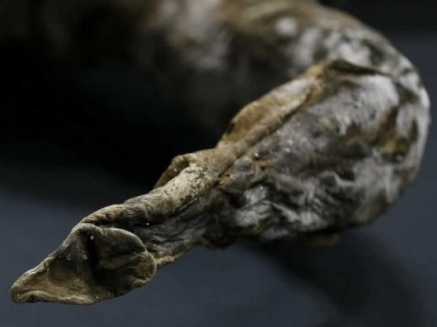 39 Bin yaşındaki Mamut'un ilk görüntüleri - Page 3