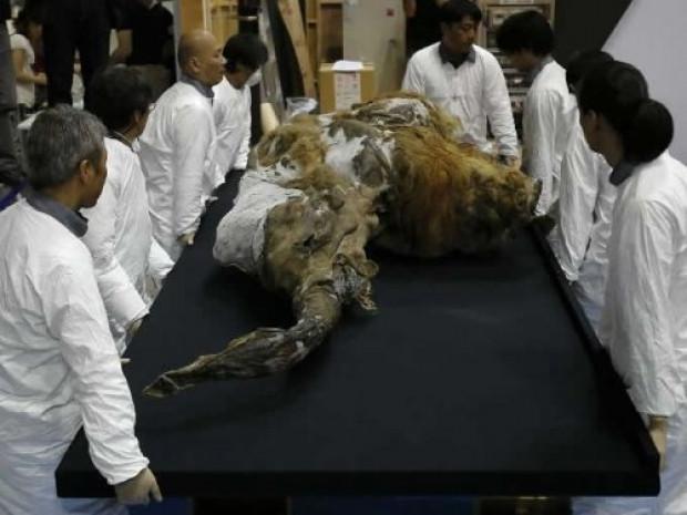 39 Bin yaşındaki Mamut'un ilk görüntüleri - Page 4