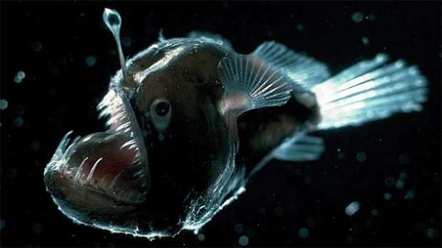 580 metre derinlikte Deniz Şeytanı bulundu! - Page 1