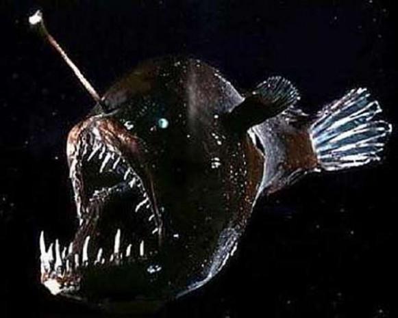 580 metre derinlikte Deniz Şeytanı bulundu! - Page 4