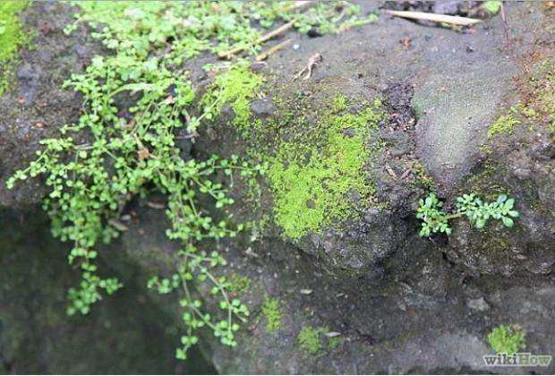 7 adımda yosunla doğal graffiti yapmak - Page 1