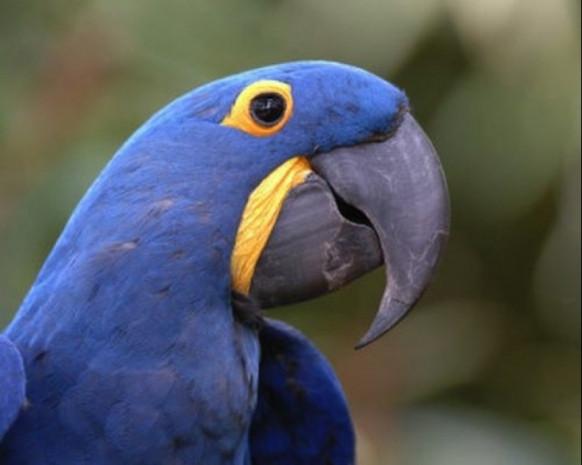 850 bin liraya kuş alır mıydınız? İşte dünyanın en pahalı 7 kuş türü - Page 2