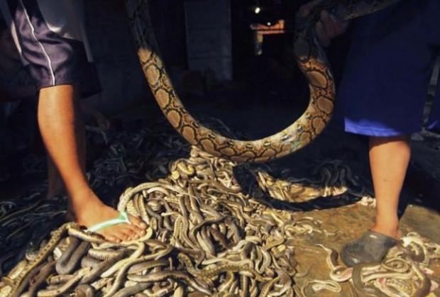 Adım adım yılan derisinden çanta üretimi - Page 3