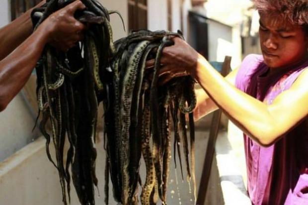 Adım adım yılan derisinden çanta üretimi - Page 4