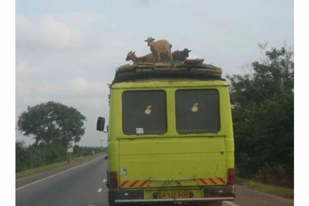 Afrika'dan en ilginç kareler! - Page 2