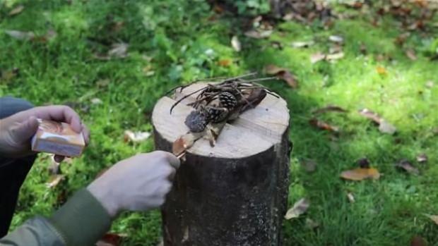 Ağaç kütüğünden öyle bir şey yaptı ki! - Page 1