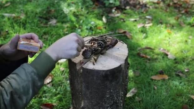 Ağaç kütüğünden öyle bir şey yaptı ki! - Page 2