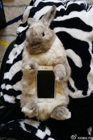 Akıllı telefon kılıfı olarak canlı kedi ve tavşan - Page 1