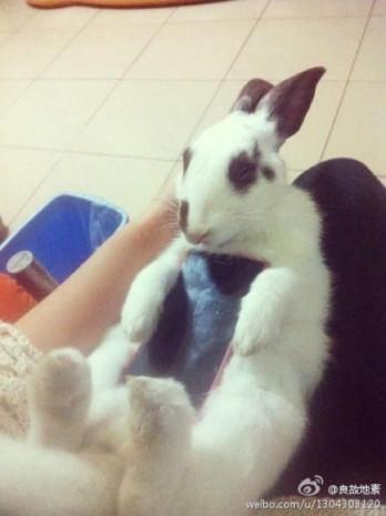 Akıllı telefon kılıfı olarak canlı kedi ve tavşan - Page 3