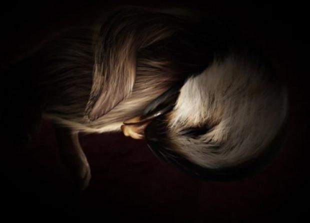 Anne rahmnindeki hayvanların mühteşem görüntüleri - Page 1