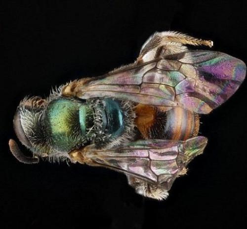 Arıları hiç böyle görmediniz - Page 1