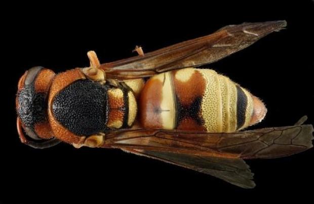 Arıları hiç böyle görmediniz - Page 2