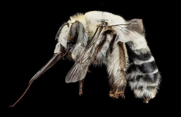 Arıları hiç böyle görmediniz - Page 3