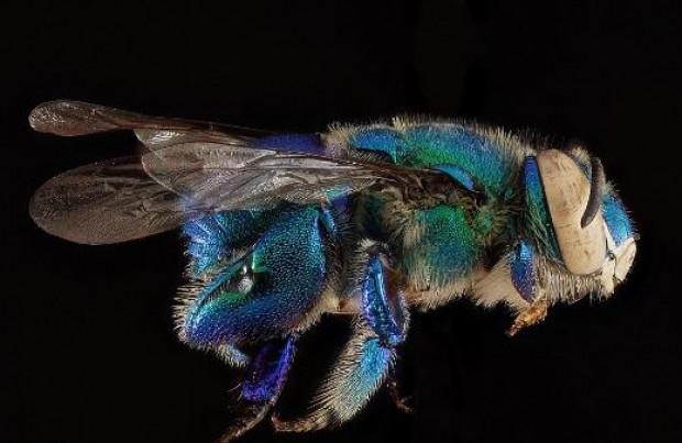 Arıları hiç böyle görmediniz - Page 4
