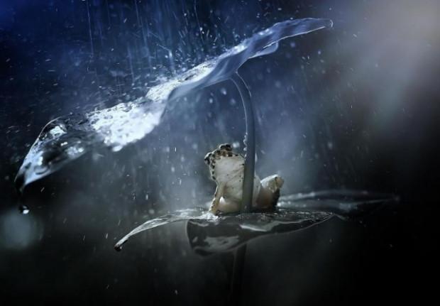 Bakın yağmur yağınca hayvanlar ne yapıyor? - Page 4