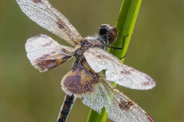 Bakınca hipnotize olacağınız 10 yakın çekim helikopter böceği - Page 2