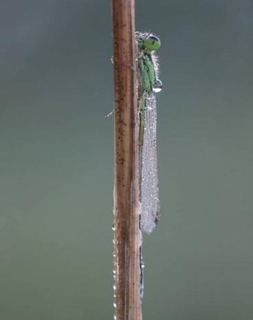 Bakınca hipnotize olacağınız 10 yakın çekim helikopter böceği - Page 3
