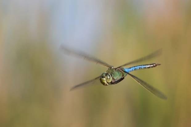 Bakınca hipnotize olacağınız 10 yakın çekim helikopter böceği - Page 4