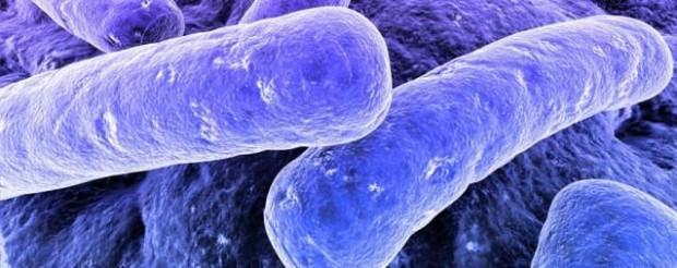 Bakterilerle ilgili gerçekler - Page 1