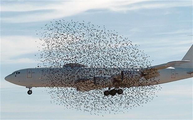 Basit bir kuşun, Uçaklara yaptığına bakın! - Page 1