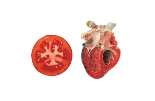 Benzediği organa iyi geldiğini kanıtlayan 10 yiyecek - Page 4