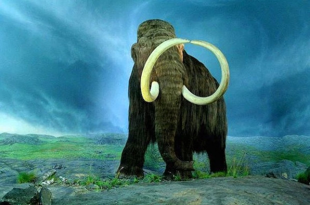 Bilim adamları bu 16 hayvanın geri gelmesini istiyor! - Page 1