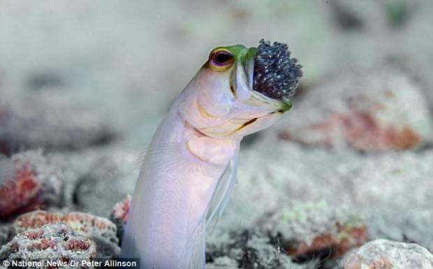 Bilim dünyası bu balığı konuşuyor! - Page 3
