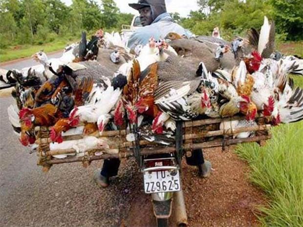 Bir motosikletle neler taşınabilir? - Page 1