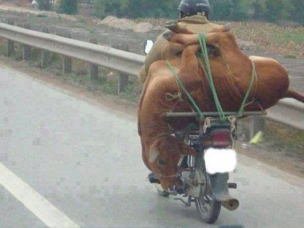 Bir motosikletle neler taşınabilir? - Page 4