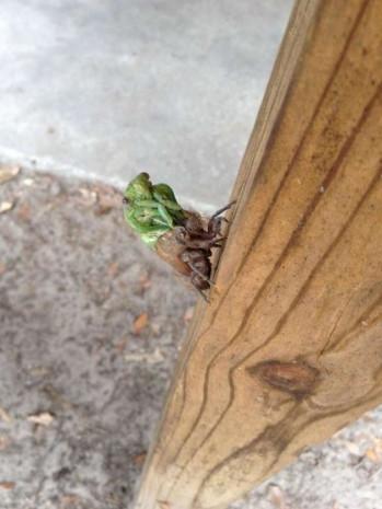 Böceğin değişme anı adım adım görüntülendi! - Page 1