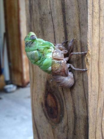 Böceğin değişme anı adım adım görüntülendi! - Page 2