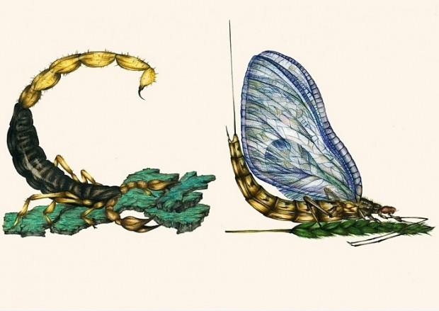 Böcekler çizerek alfabedeki harfleri oluşturan sanatçının çalışmasından 14 kare - Page 1