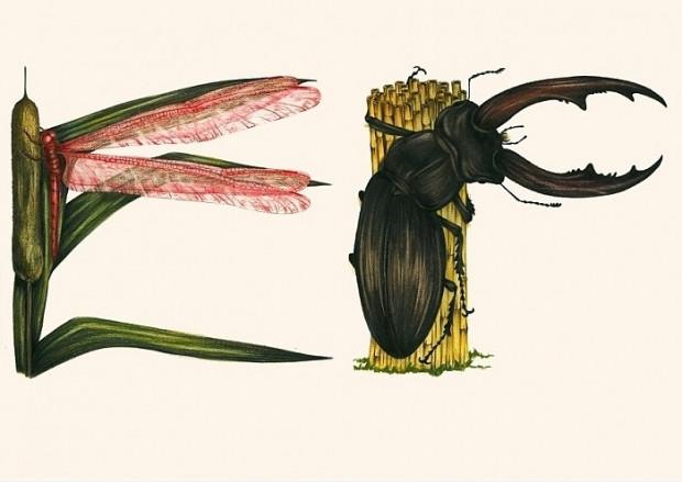 Böcekler çizerek alfabedeki harfleri oluşturan sanatçının çalışmasından 14 kare - Page 2