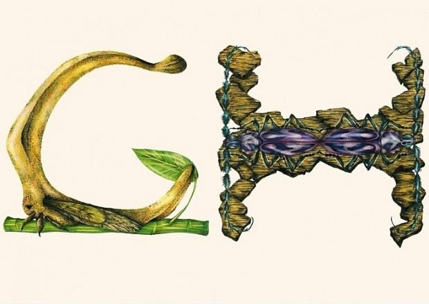 Böcekler çizerek alfabedeki harfleri oluşturan sanatçının çalışmasından 14 kare - Page 3