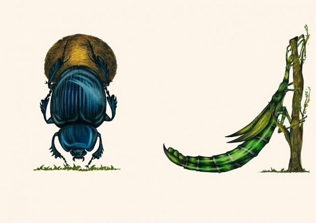 Böcekler çizerek alfabedeki harfleri oluşturan sanatçının çalışmasından 14 kare - Page 4