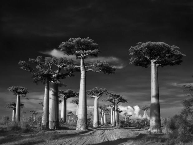 Bu 20 ağacı fotoğraflamak için tam 14 yıl harcadı - Page 1