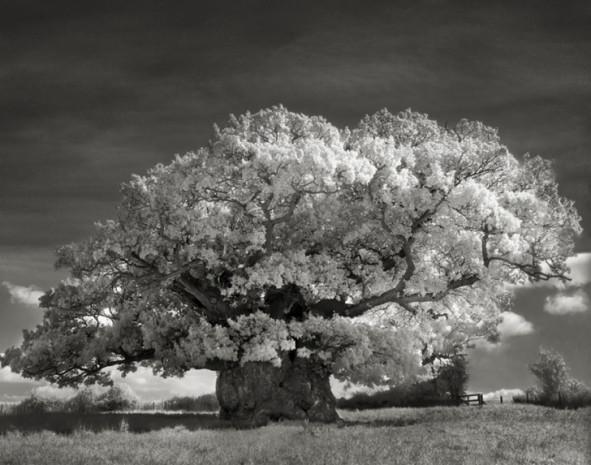 Bu 20 ağacı fotoğraflamak için tam 14 yıl harcadı - Page 2